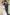 Vőlegény WILVORST sötétkék esküvői öltönyben 481201-32