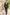 WILVORST méregzöld esküvői öltöny vőlegényeknek 791100-41